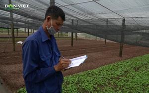 Nhật ký trồng rau - Kỷ luật trong sản xuất nông sản an toàn của nông dân Tiền Lệ