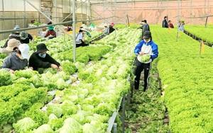 Lâm Đồng vẫn duy trì ổn định 4.000 tấn rau, củ mỗi ngày xuất đi TP.HCM