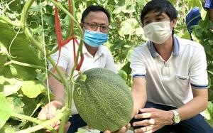 Clip: Hội Nông dân làm nhà màng trồng dưa sạch thị phạm cho nông dân