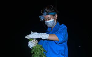"""Xúc động hình ảnh những """"chiến sĩ áo xanh"""" thu hoạch nông sản giữa màn đêm giúp bà con ngoại thành Hà Nội"""