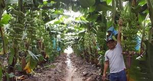 Thagrico tham vọng đưa HAGL Agrico hoạt động hiệu quả, ổn định trở lại