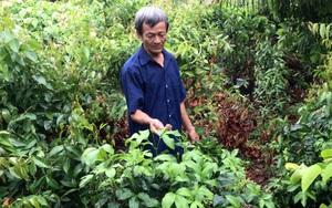 Tây Ninh: Trồng rau rừng ở vùng đất nhiễm phèn, ai ngờ thành đặc sản, hái bao nhiêu cũng bán hết veo