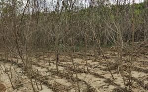 """TT-Huế: Hàng trăm hộ dân bị thiệt hại do hồ thủy lợi tích nước """"dài cổ"""" chờ bồi thường"""