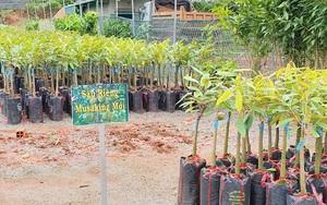 """Đắk Nông: Đáng báo động, bán giống cây trồng độc lạ tràn lan, nông dân """"dính bẫy"""" là """"tiền mất tật mang"""" ngay"""