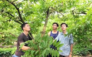 Tuyên Quang: Hội Nông dân kết nối tiêu thụ đặc sản na Yên Sơn