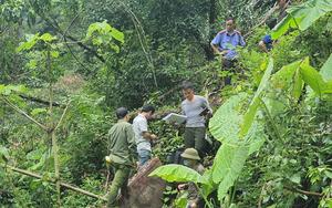 Vụ phá rừng quy mô lớn ở Hà Giang: Bắt tạm giam 5 đối tượng, tạm giữ hình sự 2 đối tượng