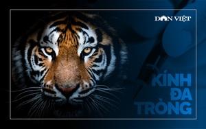 Thông điệp mở mắt từ 8 con hổ đã vĩnh viễn nhắm mắt