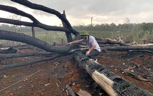 Đắk Nông: Xử phạt các đối tượng phá rừng phòng hộ hơn 1,5 tỷ đồng