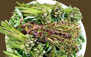 """Cà Mau: Thứ rau rừng ăn chống đói ngày xưa, tên đọc hơi """"đau mồm"""" nhưng nay là đặc sản"""