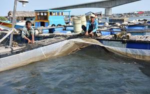 """""""Ôm"""" 400 tấn cá quá lứa vì thiếu... hóa đơn bán lẻ"""