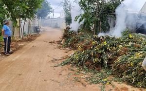 Covid-19 Lâm Đồng: Ngành nông nghiệp có giải pháp gì để hạn chế cảnh nông dân đổ bỏ nông sản?