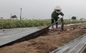 Video: Rau sạch không có đầu ra, nông dân Mê Linh ngậm ngùi bỏ trống ruộng