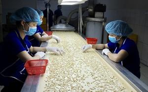 Sau Mỹ, đến lượt châu Âu đề nghị Việt Nam tiêm phòng khẩn cấp cho lao động ngành điều