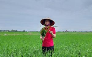 Nông dân Việt Nam xuất sắc 2021: Bằng cách nào chị nông dân Hải Phòng có 100ha đất cấy lúa, trồng rau?