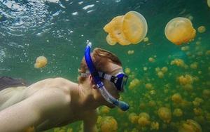 Bí ẩn hồ nước chứa hàng triệu con sứa mà khách du lịch vẫn bơi lội tung tăng