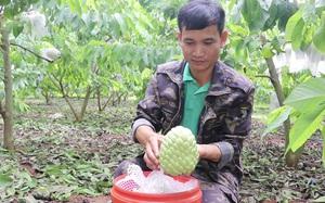 Sơn La: Chuyên canh cây na theo hướng nông nghiệp sạch, HTX Mé Lếch thu hàng tỷ đồng