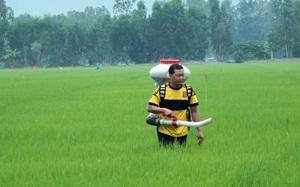 Giảm lượng giống, phân bón để hạ giá thành sản xuất lúa