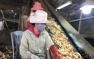 Tại sao Trung Quốc đột ngột giảm mua loại nông sản này của Việt Nam, chuyển sang mua của Thái Lan?