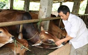 Thuận Châu chú trọng phát triển chăn nuôi bền vững