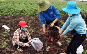 Kiên Giang: Áo xanh tình nguyện xuống đồng - ra phố giúp nông dân tiêu thụ nông sản