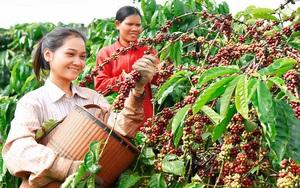 Giữa dịch Covid-19, hai đại gia cà phê Pháp, Ba Lan đạt thỏa thuận xây dựng nhà máy cà phê hòa tan tại Bình Dương