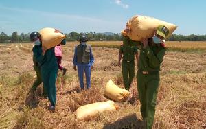 Đà Nẵng: Nông dân xuyên ngày đêm gặt lúa, công an sáng trực chốt phòng dịch, trưa nắng đổ lửa gặt lúa giúp dân