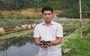Thái Nguyên: Nuôi ốc nhồi đặc sản, nông dân dân tộc Tày ở nơi này cùng nhau làm giàu