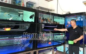 Nam Định: Nuôi thứ cá gì mà có con bán tới 60 triệu, mỗi tháng lãi ròng 50-70 triệu?