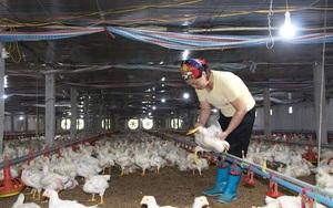 Giá gia cầm hôm nay 3/8: Giá gà thả vườn nhiều vùng tăng, gà trắng ba miền giảm giá thêm