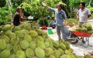 Trung Quốc mua nhiều trái cây của Việt Nam nhưng đòi hỏi phải có mã số vùng trồng