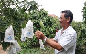 Vẫn còn tình trạng mạo danh mã số vùng trồng khiến nông sản Việt bị ảnh hưởng uy tín