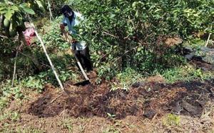 Hướng dẫn cải tạo đất để trồng cây ăn trái theo hướng hữu cơ