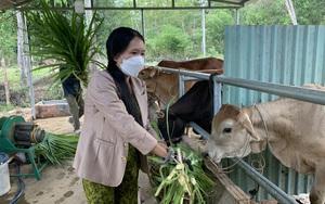 Quảng Nam: Vốn vay ưu đãi tiếp sức cho nông dân trồng cây ăn quả, chăn nuôi bò vươn lên thoát nghèo