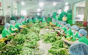 Combo nông sản của một tổ công tác có gì đặc biệt mà 10 phút có 52.000 đơn đặt hàng?