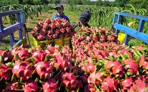 Trung Quốc chi 7,69 tỷ USD nhập khẩu trái cây, mua của Việt Nam 1,3 tỷ USD