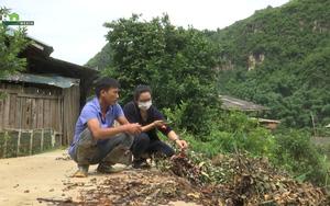 Sơn La: Trồng hoa không bán được, người dân chất đống bỏ đi