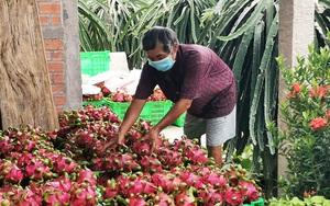 Ấn Độ cần 48 triệu tấn trái cây/năm, thanh long Việt Nam tìm đường bán sang thị trường 1,4 tỷ dân