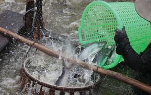 Chồng chất khó khăn, Thủy sản Mekong (AAM) tiếp tục báo lỗ hơn 3 tỷ trong quý II