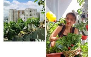 Ấn tượng với vườn rau mini xanh mướt trên ban công tí xíu