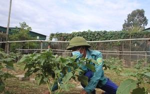 Hà Tĩnh: Bỏ nghề phụ hồ đầu tư làm rau trái mùa, vợ chồng lão nông rủng rỉnh tiền tiêu