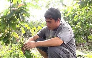 An Giang: Trai làng trồng thứ cây lạ ra trái treo lủng lẳng, bán chạy vèo vèo, ai cũng muốn đòi vô xem