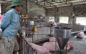Giá thức ăn chăn nuôi tăng 9 lần: Kiến nghị đưa vào hàng bình ổn giá