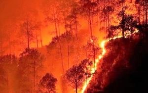10 vụ cháy rừng tồi tệ nhất thế giới từng chứng kiến