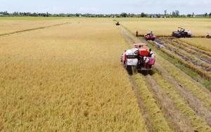 Giá lúa tại ĐBSCL tăng nhẹ trở lại, nông dân thêm động lực, an tâm phòng dịch chuẩn bị vụ mùa mới
