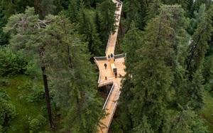 """Đường đi bộ """"trên cây"""" độc nhất vô nhị, dài nhất thế giới"""