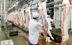 Nghệ An: Huyện Nam Đàn chủ động chuẩn bị sớm nguồn cung thịt lợn phục vụ dịp Tết Nguyên đán