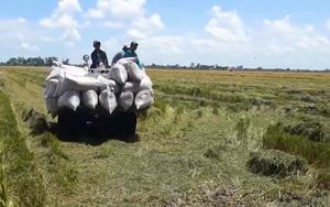 Nghệ An chạy đua với bão Conson để bảo vệ nông sản