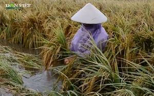 Bão Conson gây mưa lớn tại miền Trung, hơn 1.382 ha lúa bị ngập