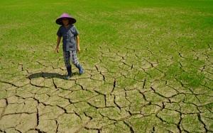 Lạ đời ở tỉnh Gia Lai: Hạn hán giữa mùa mưa, cây trồng chết la liệt,  nông dân ngao ngán kêu trời
