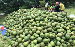 Hội Nông dân Đồng Nai ra sức kêu gọi giúp tiêu thụ nông sản cho nông dân